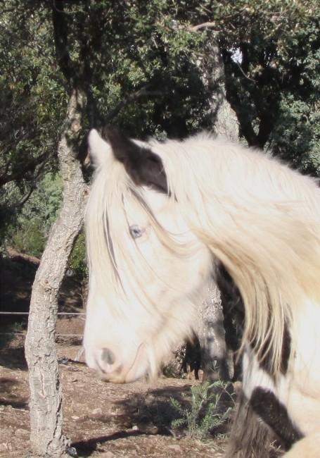 Gwen au Vallon de la Mourre, NEWS P. 2 01-01-24