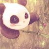 Multi-Japo Panda_10
