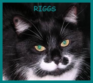 Demande de pièce d'identité Riggs_11