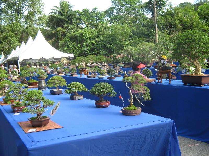 Penang Island Bonsai Competition 2010 Dec  (Malaysia) Img_2912