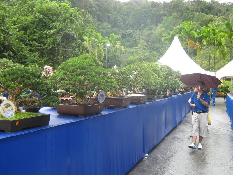 Penang Island Bonsai Competition 2010 Dec  (Malaysia) Img_3010