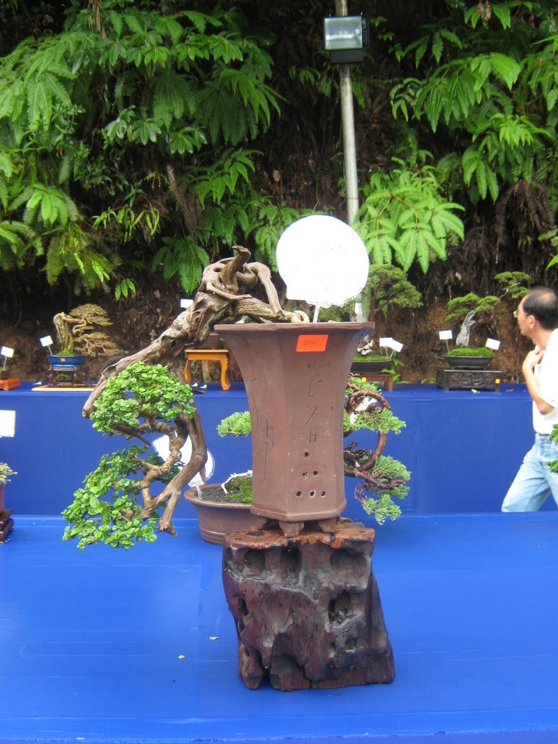 Penang Island Bonsai Competition 2010 Dec  (Malaysia) Img_3032