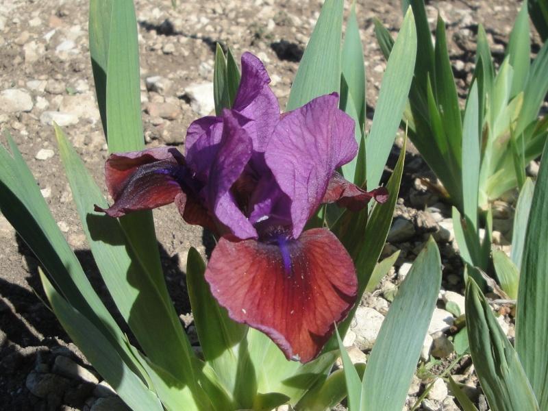 Jean-Luc de La Ferme des Iris en Charente - Page 4 Jewele10