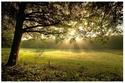 bosques y arboledas campo 10_04_11