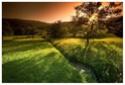bosques y arboledas campo 10_04_12