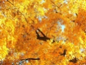 bosques y arboledas campo Autumn10