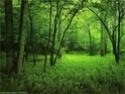 bosques y arboledas campo Bosque10