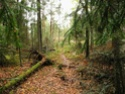 bosques y arboledas campo Damp10