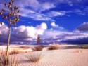 paisajes deserticos Desier10