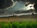 bosques y arboledas campo Stock_23