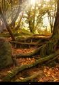 bosques y arboledas campo Stocks10