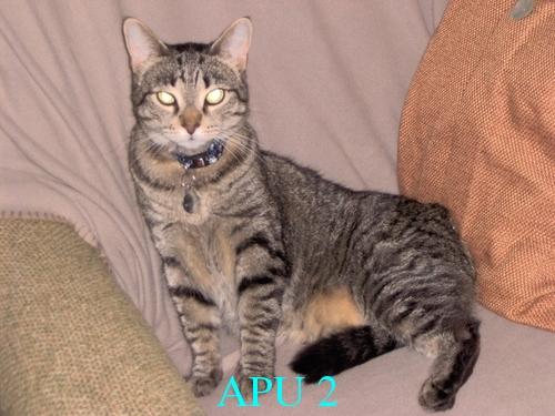 APU's Official April POTM Voting Thread (Pet) Crabby11