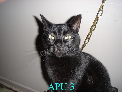 APU's Official April POTM Voting Thread (Pet) Metal_12