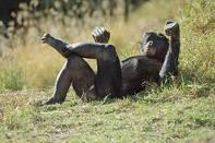 Joyeux anniversaire... - Page 3 Bonobo11