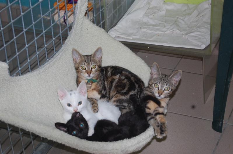 Yin et Yang, chatons mâles nés le 1er mai: un mauvais début dans la vie... (60) Dsc_0164