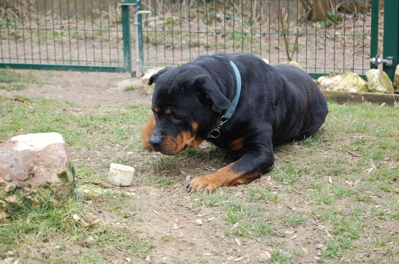 Roxanne, rott 5 ans en total délaissement (Oise) Dsc_0564