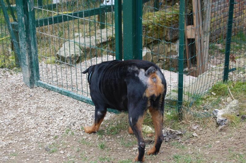 Roxanne, rott 5 ans en total délaissement (Oise) Dsc_0567