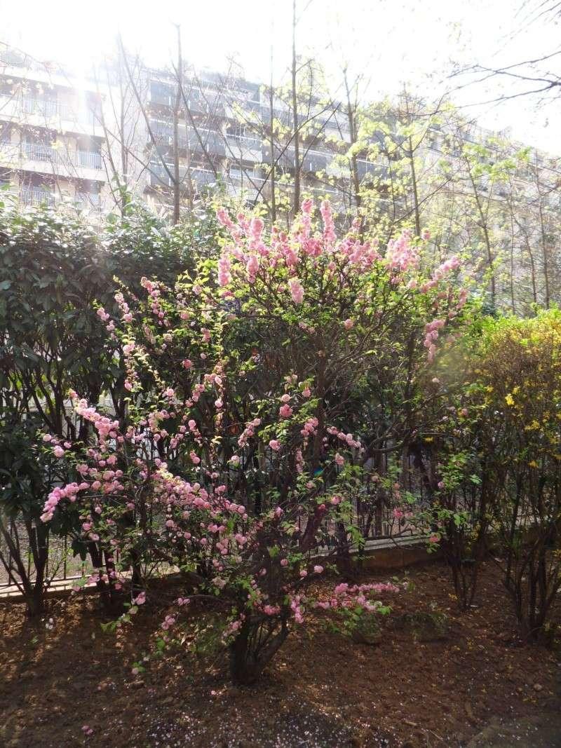 vos jardins  vos plantes - Page 6 Sdc10131