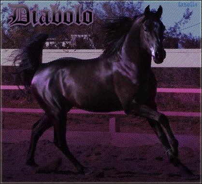 Boutique de Fasolla Diabol12