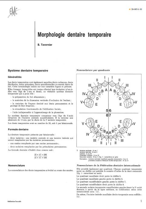 morphologie dentaire temporaire Sans_t20