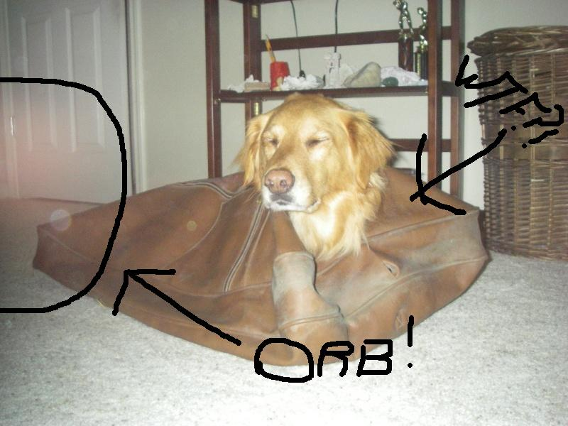 Show didly12 productions your pets! Orb11