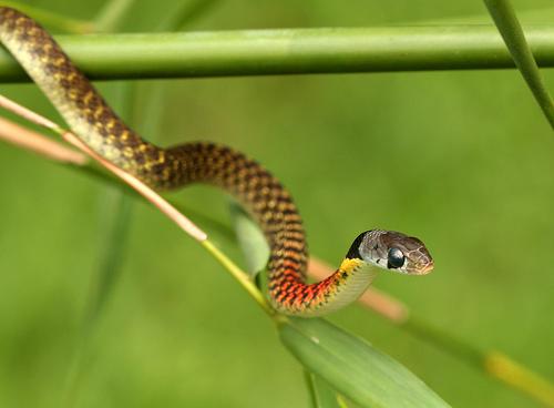 petit quiz serpent  31844710