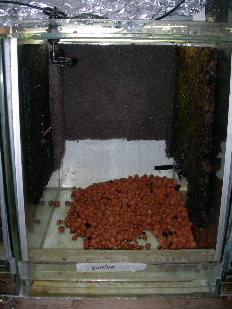 Décoration du terrarium tropical humide Dscn2723