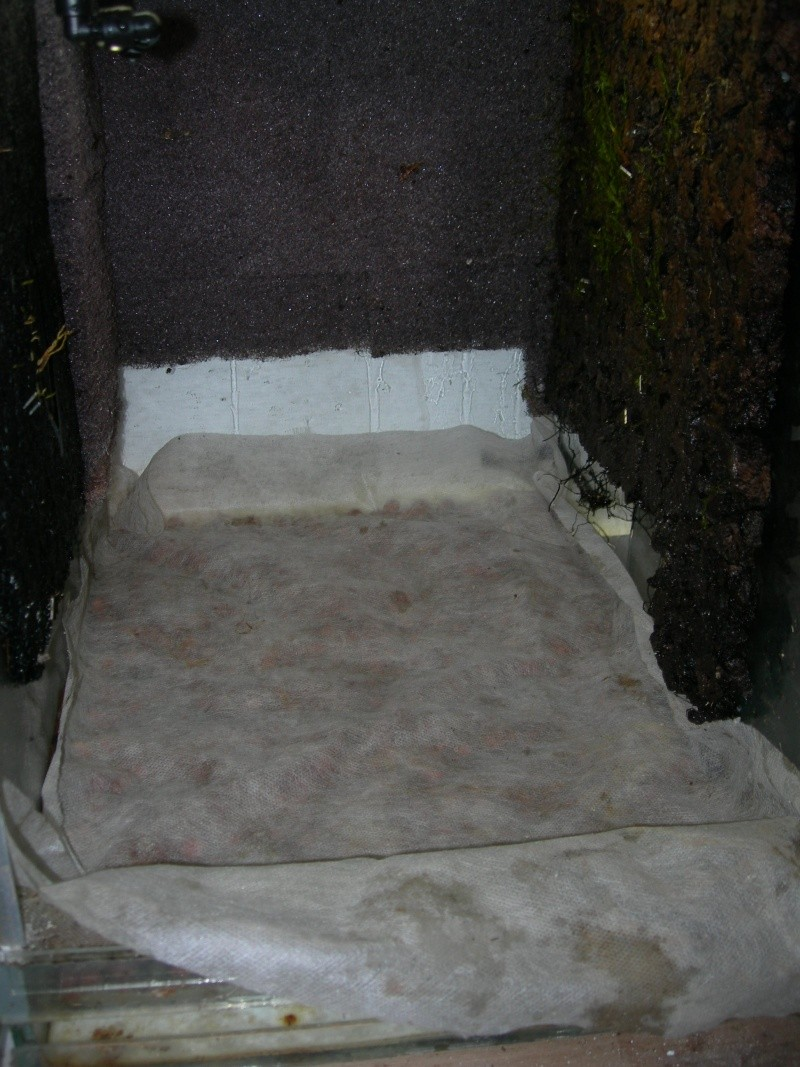 Décoration du terrarium tropical humide Dscn2724