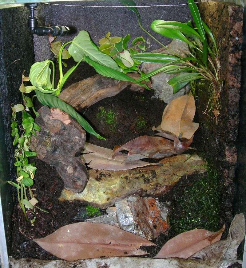 Décoration du terrarium tropical humide Dscn2810