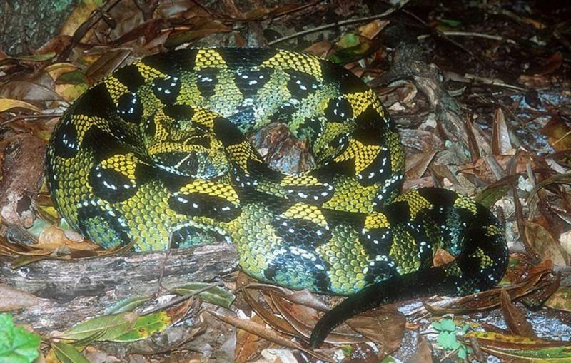 petit quiz serpent  Mmmmm10