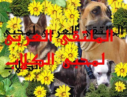 الملتقى العربى لمحبى الكلاب