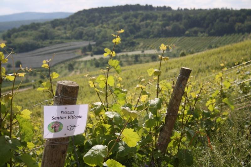 Fête de la colline dimanche le 31 mai Img_1411