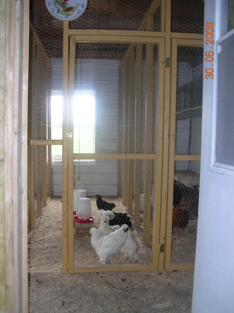 Photo de l'intérieur de mon nouveau poulailler Poules10