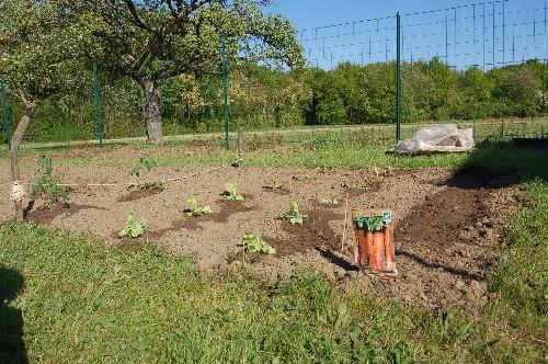 A vos photos : on recherche le plus beau potager.. Jardin11