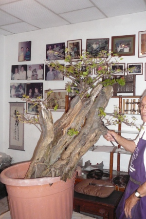 Bonsai from the Andes in South America Ecuador Cqs12210