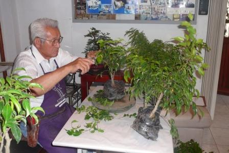 Bonsai from the Andes in South America Ecuador Opt12210