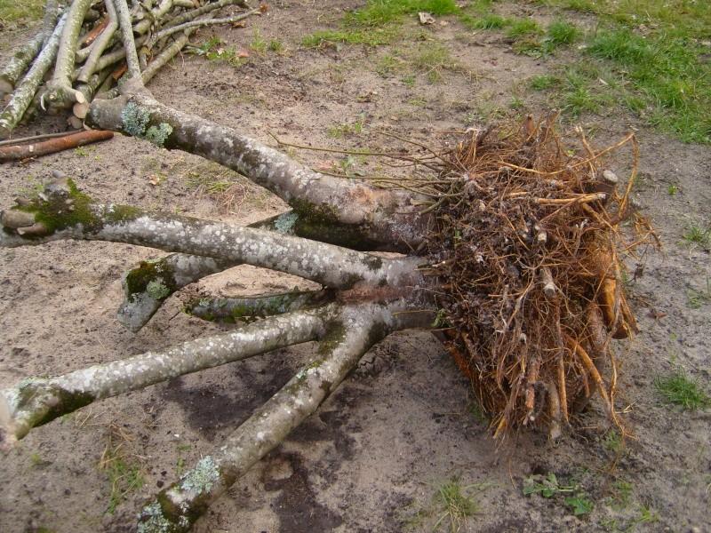 comment secher le bois sans qu'il se fende? - Page 2 S7004610