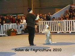 L'OBERYTHMEE avec un husky Salona10