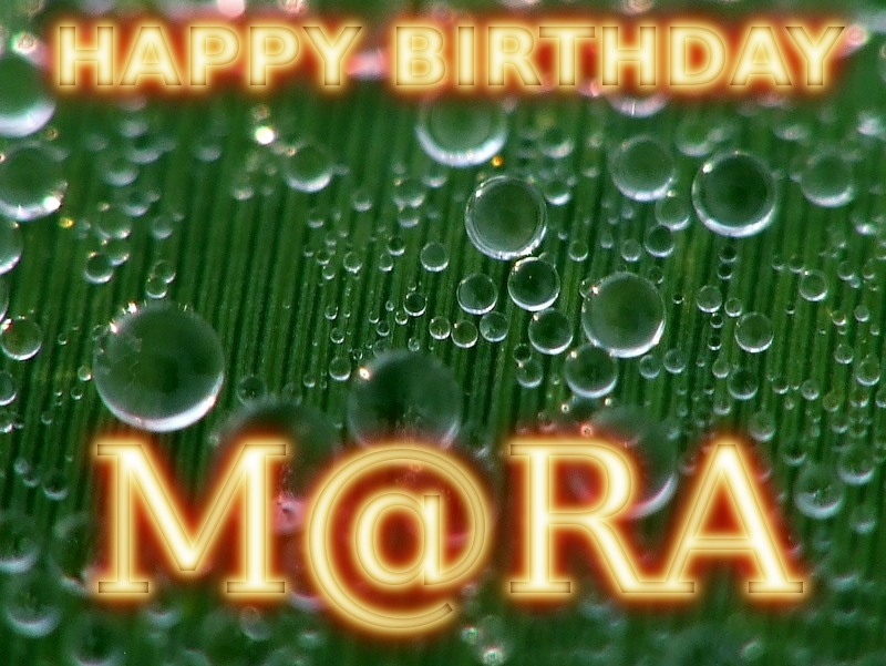 *~*~*HAPPY BIRTHDAY M@RA*~*~* Mara10