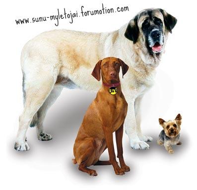 Šunų mylėtojų forumas