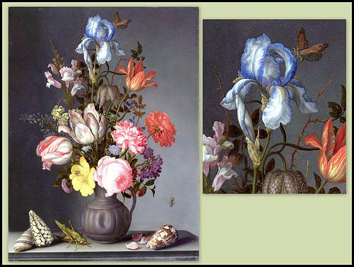 Les Iris plicata - une longue histoire et un bel exemple d'évolution 40461713