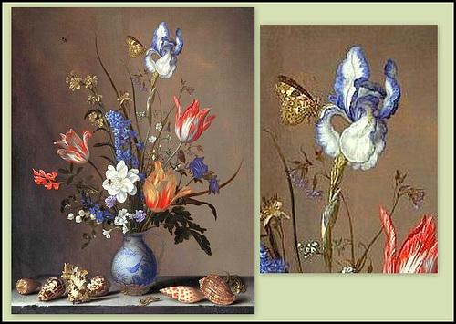 Les Iris plicata - une longue histoire et un bel exemple d'évolution 40461714