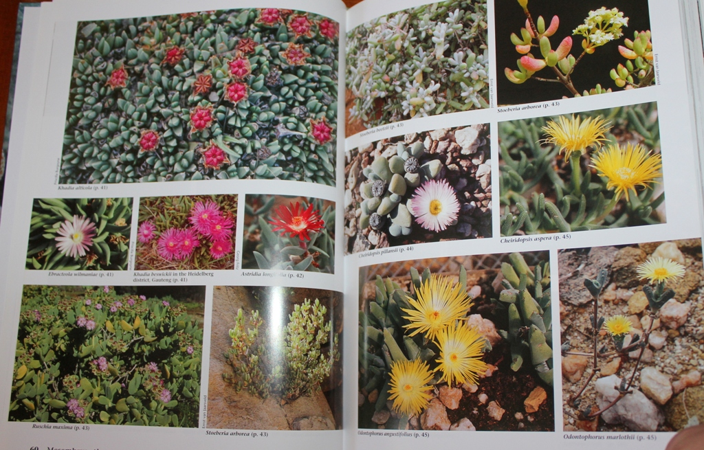 Succulent flora of Southern Africa Succul13