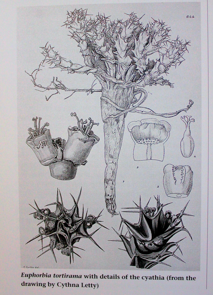 Succulent flora of Southern Africa Succul15