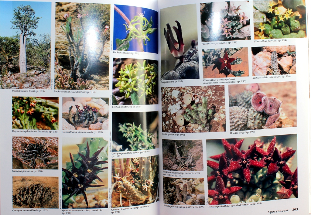 Succulent flora of Southern Africa Succul17