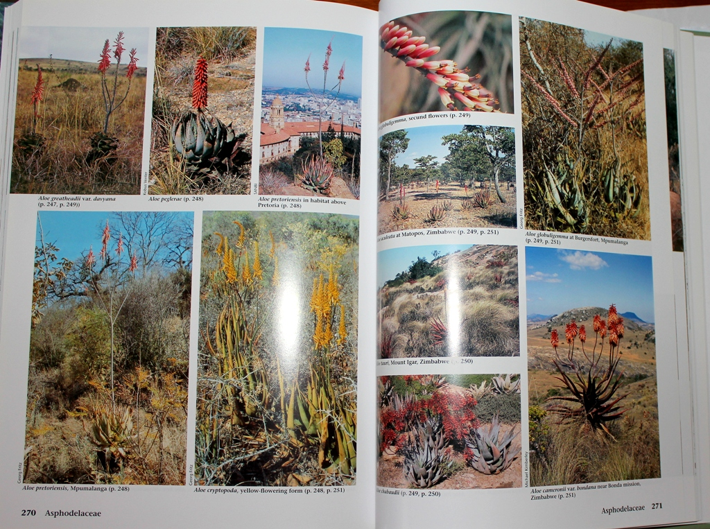 Succulent flora of Southern Africa Succul18