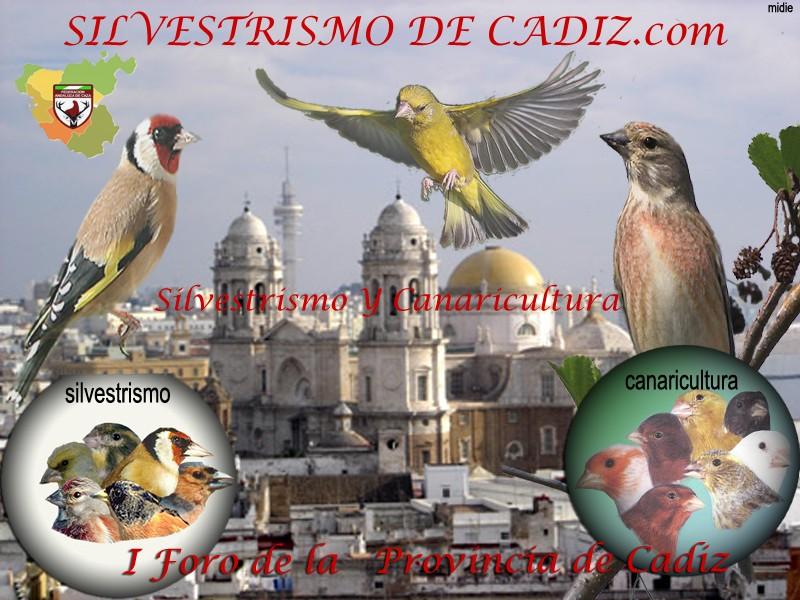 EL SILVESTRISMO  DE CADIZ .com