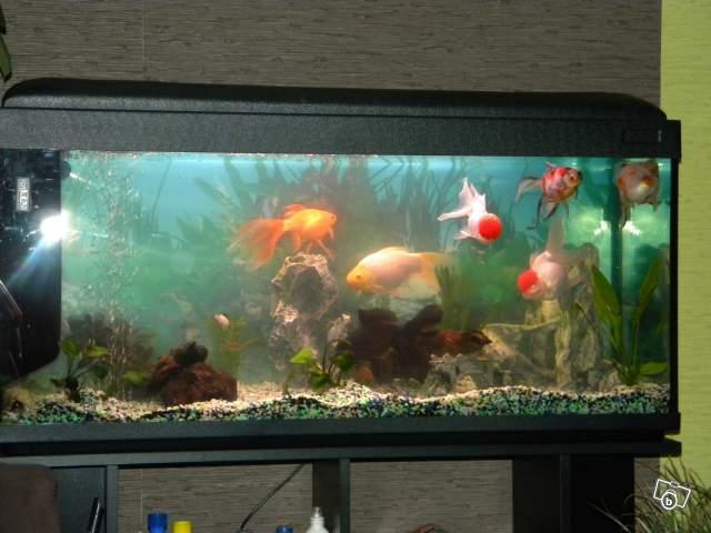 Le respect du poisson rouge - Page 2 23610410