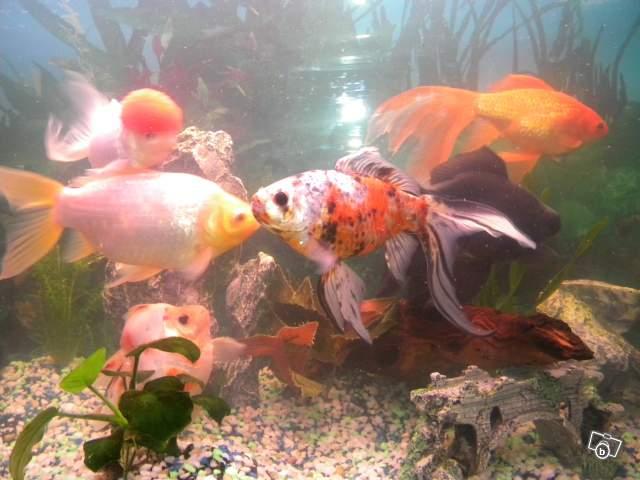 Le respect du poisson rouge - Page 2 23796210