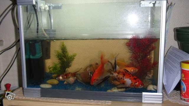 Le respect du poisson rouge - Page 2 35633610